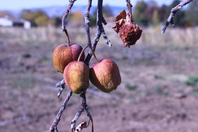 2014-10-27 Farley Orchard Murdered (19)