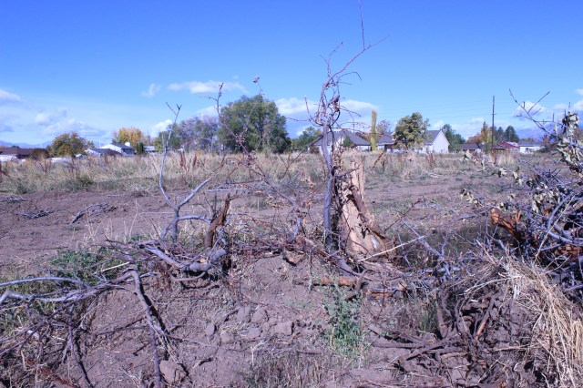 2014-10-27 Farley Orchard Murdered (7)