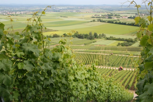 Grossgartach 2009 110