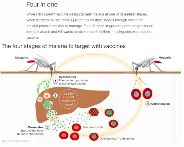Malaria 4 stages