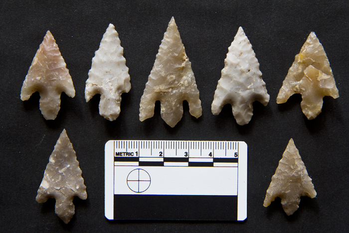 A group of seven barbed-and-tanged arrowheads from Cremation Pit 10, Broich Road, Crieff. Photo by Woody Musgrove