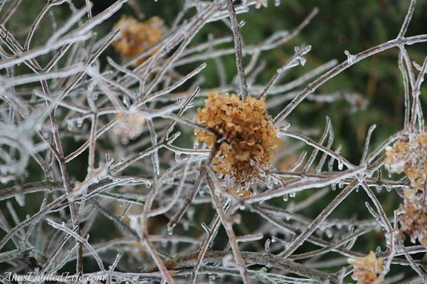 Close-up of frozen rain on small tree, 4