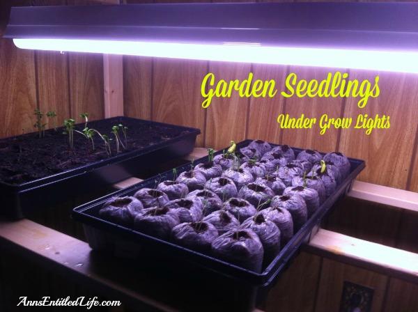 Growing Garden Seedlings Indoors