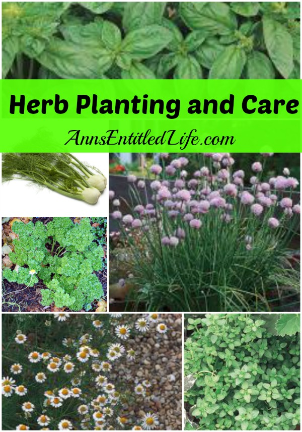 Herb Planting and Care. This is seedling, companion planting and maintenance instructions to help you grow the best herb garden (indoor or outdoor) possible!