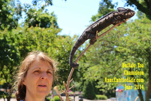 Buffalo Zoo Chameleon