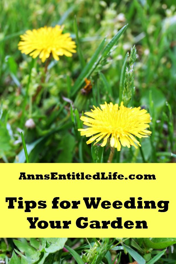 Tips For Weeding Your Garden. It's that time of year: summer and gardening season is in full swing. And with it, comes the weeds. And more weeds. And more weeds.  Regardless of how diligent at preventative weed measures, if you have a garden, you will have weeds.  The seeds from weeds can lay dormant for years. They are out there, just waiting to spring up one night!