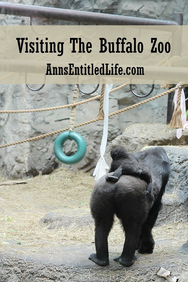 Visiting the Buffalo Zoo is a fun time wrapped in an educational experience. Bring the whole family to enjoy the many animal exhibits and interactive displays. The Buffalo Zoo also offers specific field trip, educational opportunities and tours.