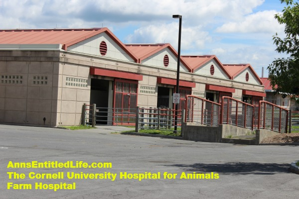 The Cornell University Hospital for Animals Emergency Room Equine Entrance