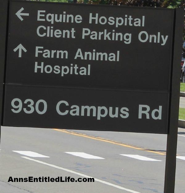 The Cornell University Hospital for Animals Emergency Room Equine Entrance