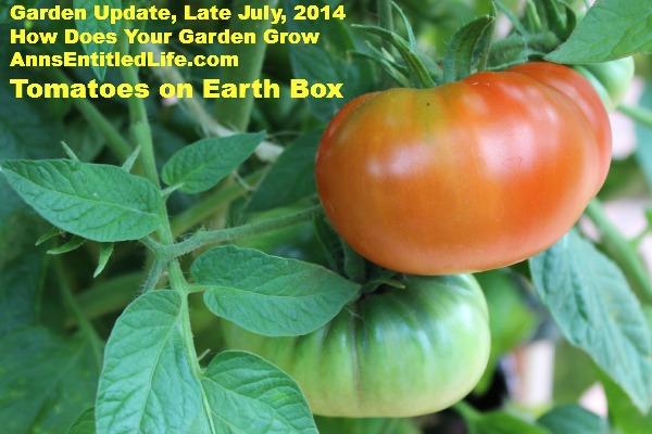Garden Update, Late July, 2014