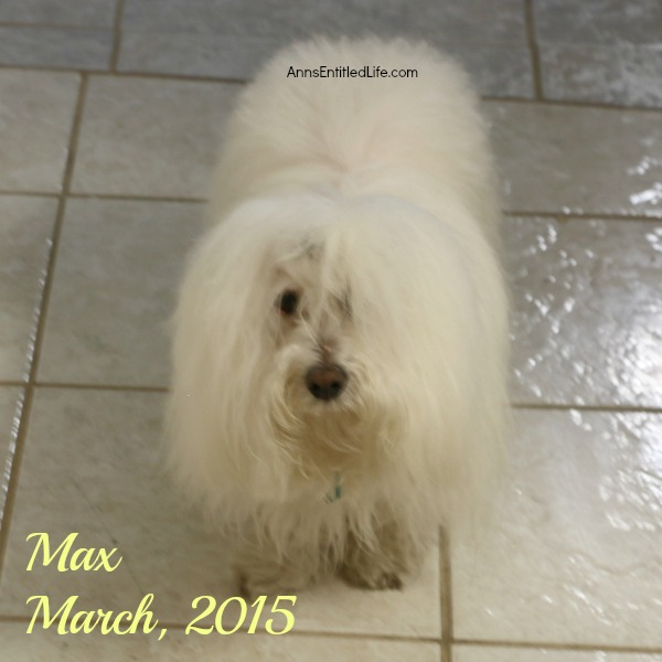An Update on Mr Max, March 2015