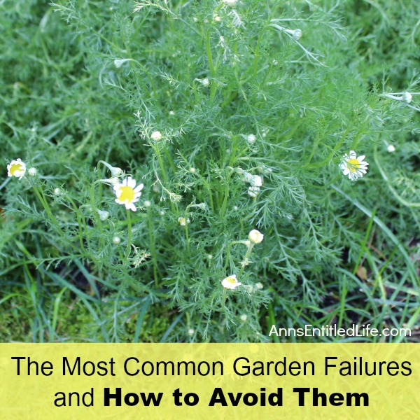 The Most Common Garden Failures and How to Avoid Them. Identifying common causes for most garden failures. These simple solutions will help avoid the reasons most gardens fail, and offer corrective measures so your garden will thrive!