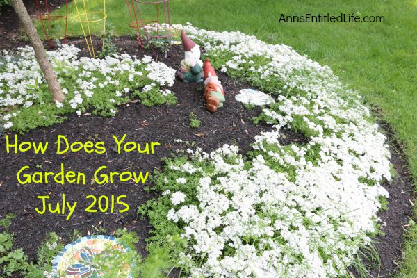 How Does Your Garden Grow? July 2015