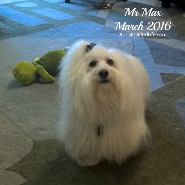 Max's GME Update