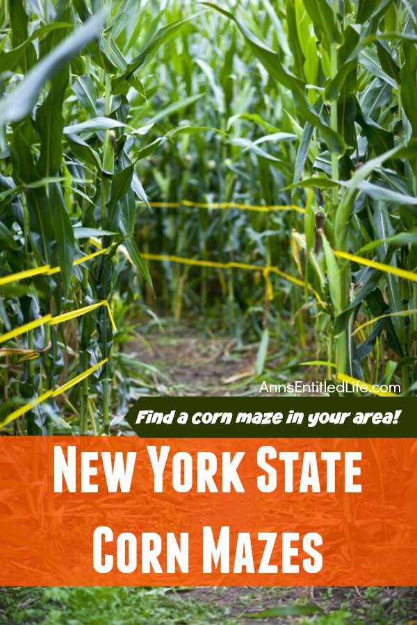 2016 New York State Corn Mazes. Have some great outdoor family fun this fall at a New York State corn maze!! Whether you are looking to spend the day in a corn maze, for a fright night scream or corn mazes by moonlight there is something for everyone on this list of 2016 New York State Corn Mazes!