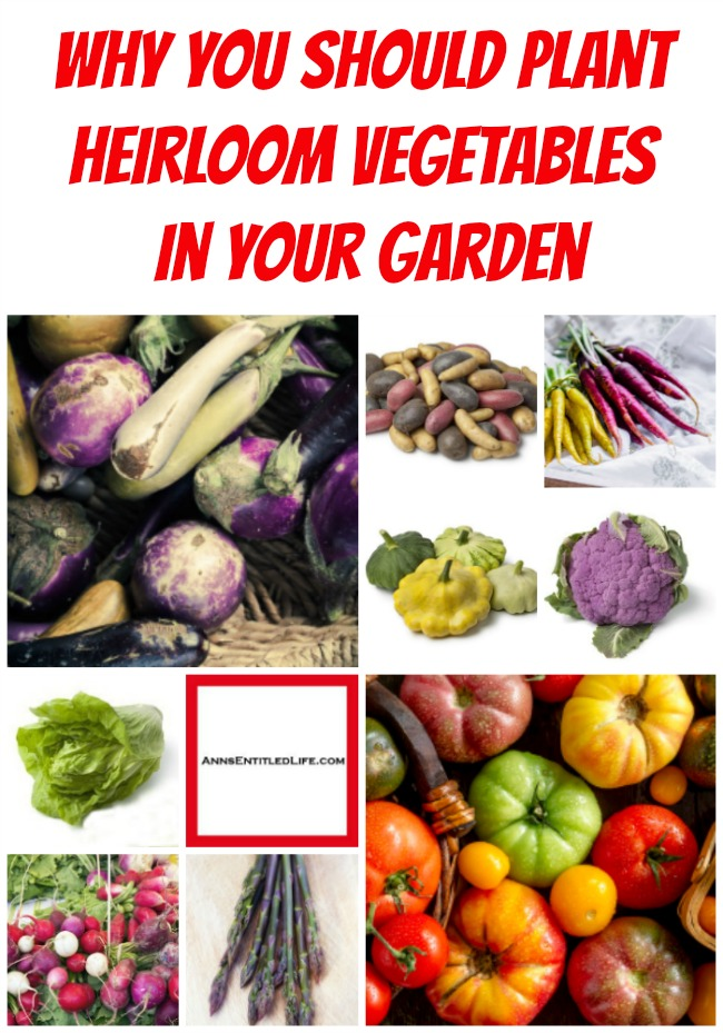 Why You Should Plant Heirloom Vegetables in Your Garden. An explanation (list) of the pros and cons of purchasing and growing heirloom vegetable plants and seeds, as well as where to purchase heirloom plants and heirloom seeds locally and online.