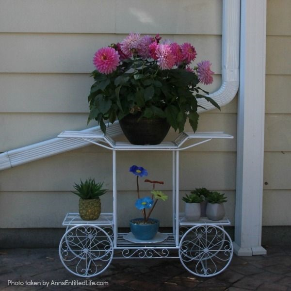Spring Container Gardening. Experimenting with container gardening. Flowers.