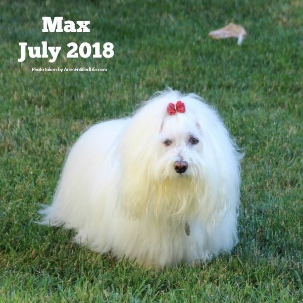 Max is Back to Chemo for His GME. Max's GME Update. This is an update of the chemotherapy protocol of our dog, Max who is battling Granulomatous meningoencephalomyelitis (GME). This is a canine disease where the white blood cells attack the central nervous system.