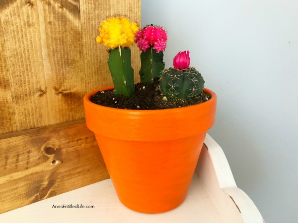 How to Plant a Cactus Container Garden. Planting cactus is easier than you think, and are excellent, low-maintenance plants for indoors. Follow these step-by-step directions to learn how to plant a colorful and bright cactus container garden.
