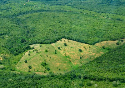 Deforestation monitoring system goes global