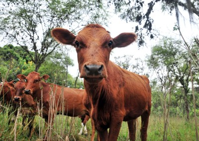 Bovine Intervention: Making livestock production more sustainable