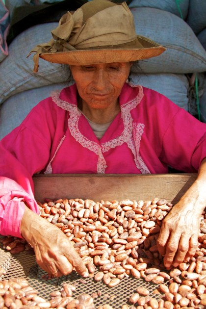 Cacao Processing and Drying
