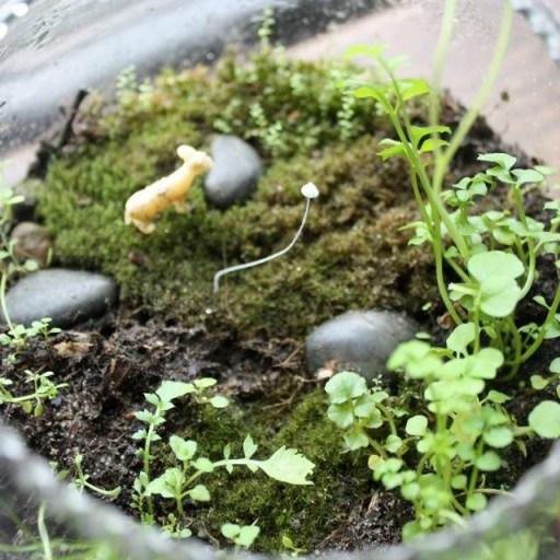 tiny mushroom