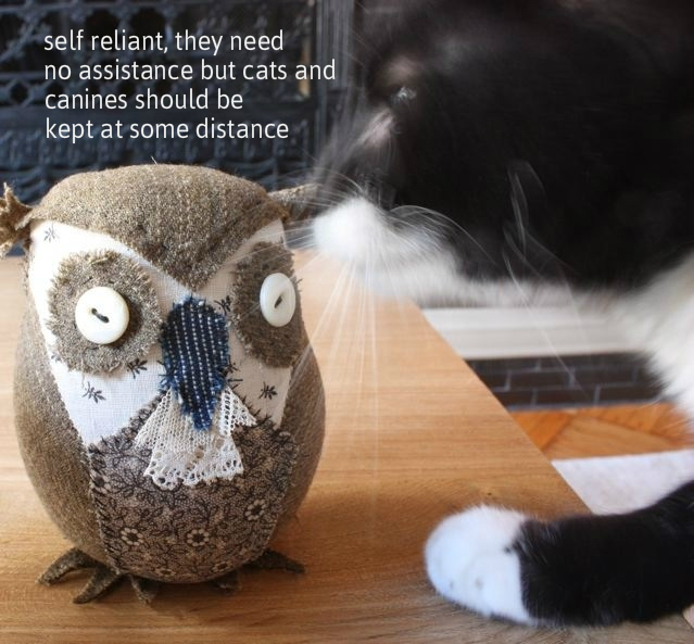 cat and owl