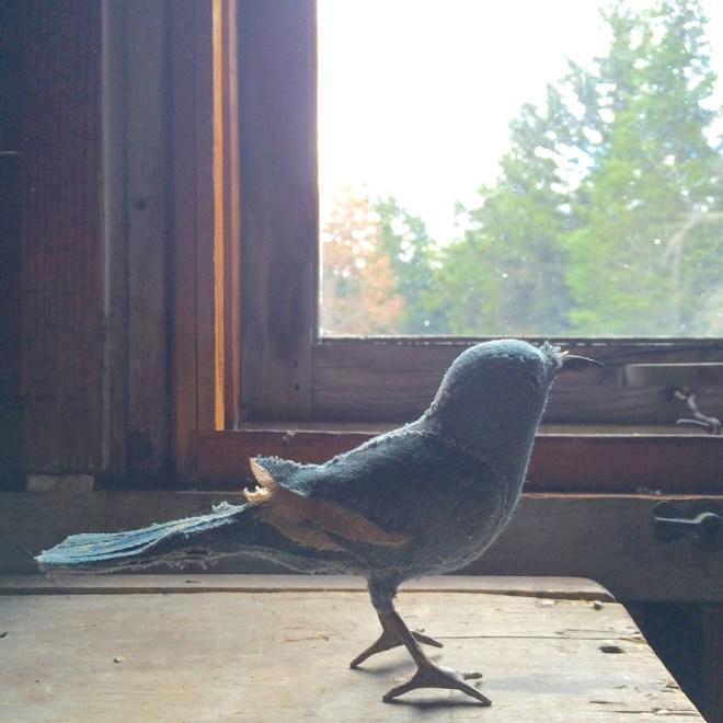 blue grey warbler
