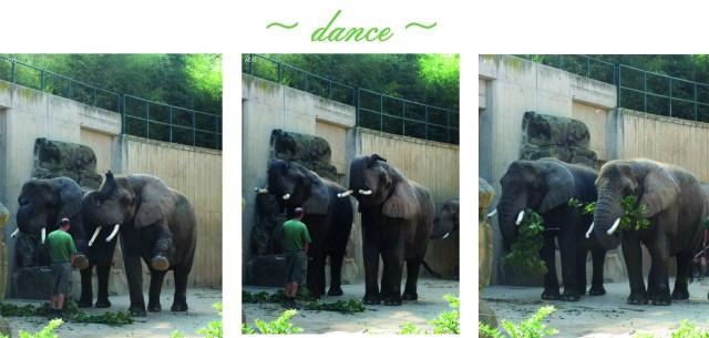 Elefantensynchro (c) Kleemann