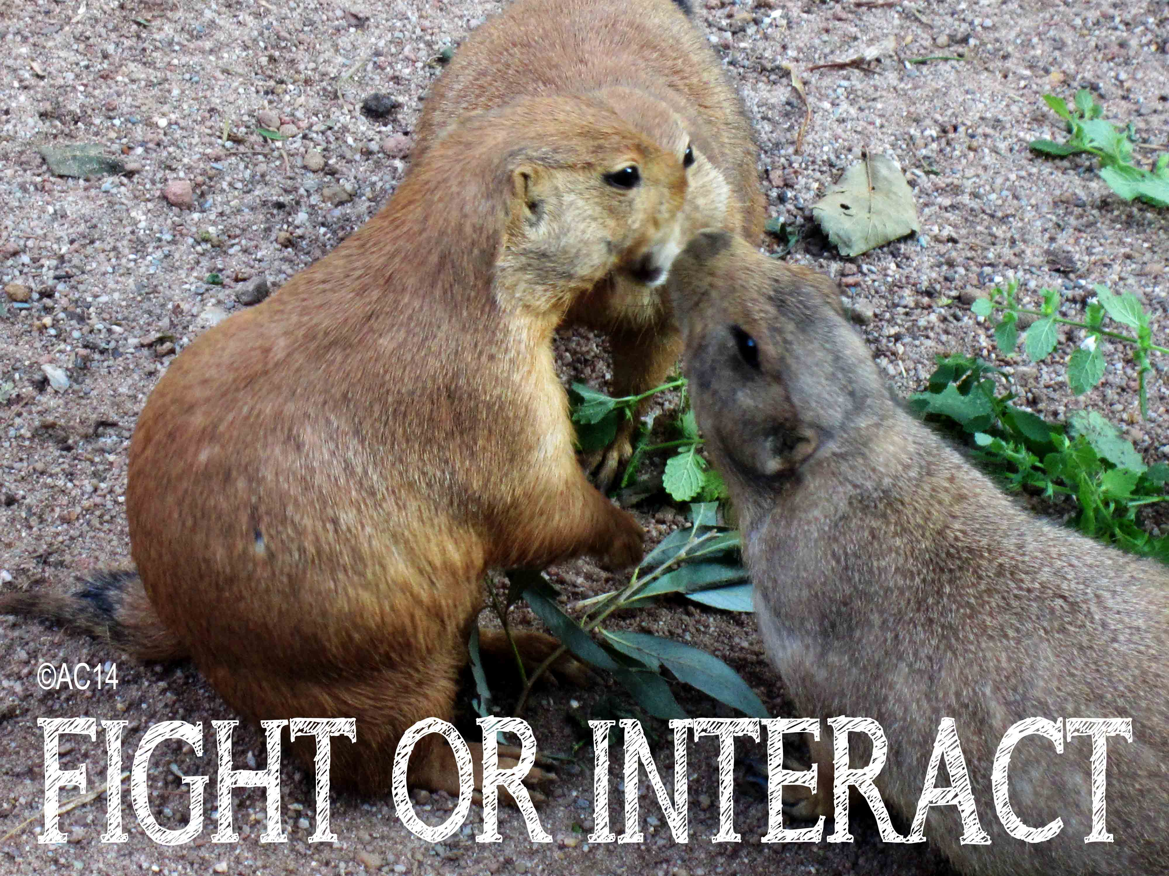 Fight or Interact