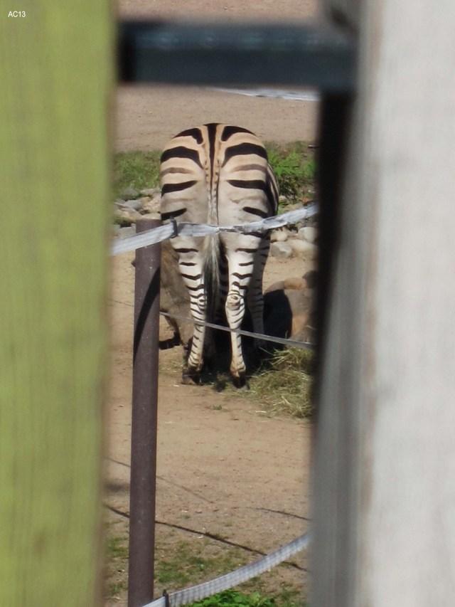 Zebra und so (c) Kleemann
