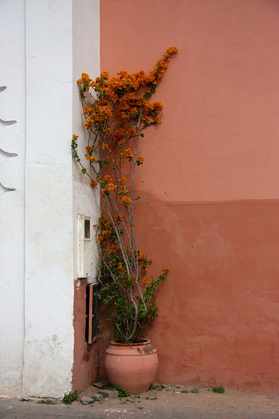 In the shade of the Koutoubia, Marrakesh