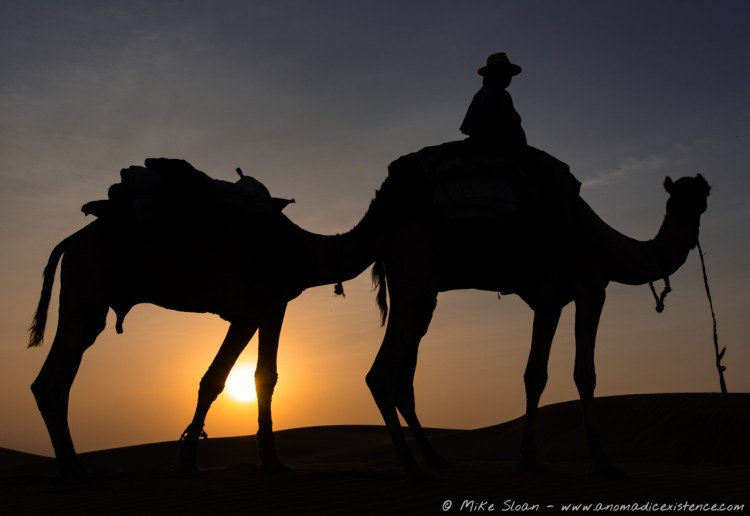 Camel silhouette against the setting sun in the Thar Desert.