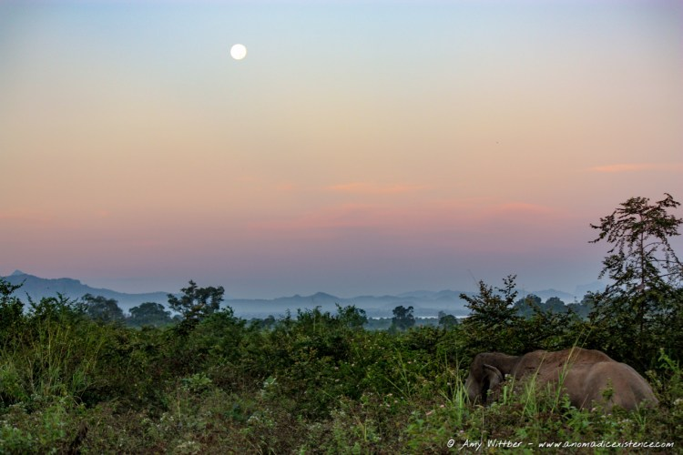 Elephant at Sunrise, Udawalawe National Park, Sri Lanka