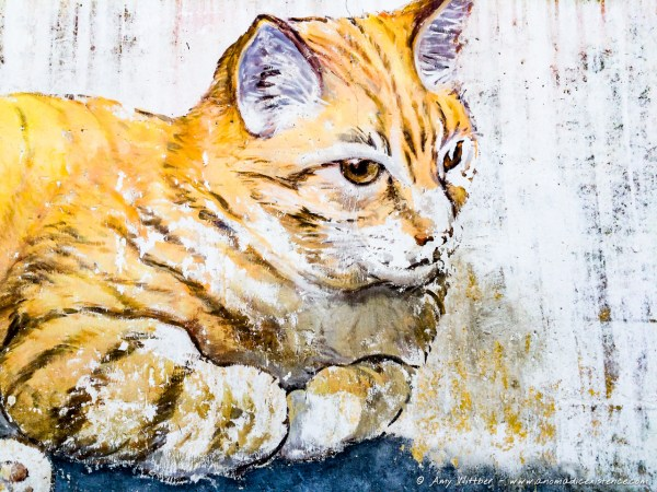 Cat fan? There's LOTS of street art depicting cats, especially on Armenian Street!