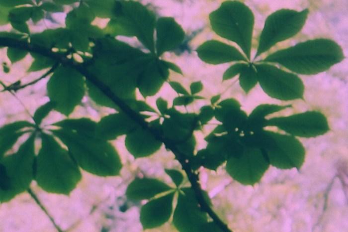 foglieverdisusfondorosanaturalepiccola