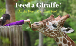 You Can Feed a Giraffe When You Visit the North Carolina Zoo!