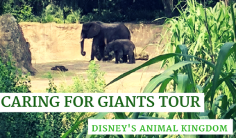 Caring for Giants Tour at Disney's Animal Kingdom Review