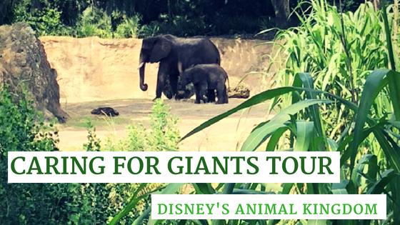 elephant tour animal kingdom