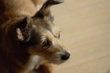 kenji dog photography irene park an opus per diem