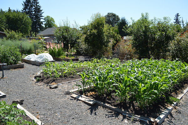 Mid summer easy care vegetable garden design