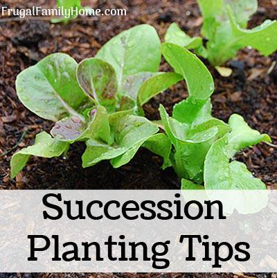 Succession planting tips at Frugal Family Home