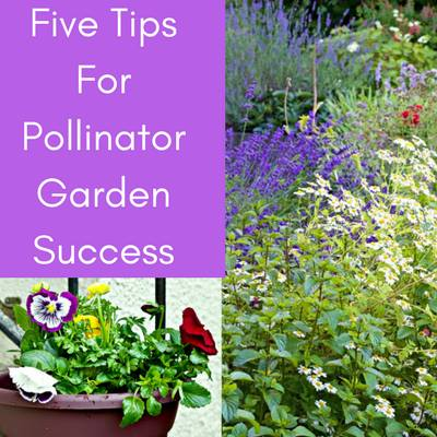 Tips for Pollinator Garden Success at Homemade Food Junkie