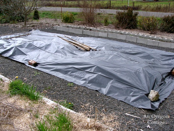 Planting a garden bed-No-Till Vegetable Bed covered in plastic