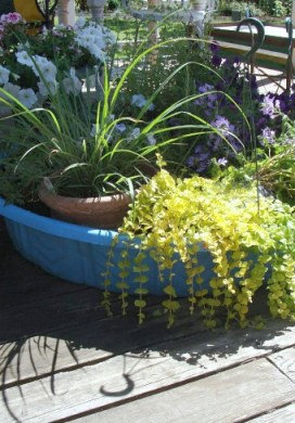 Vacation Watering Tip for Potted Plants
