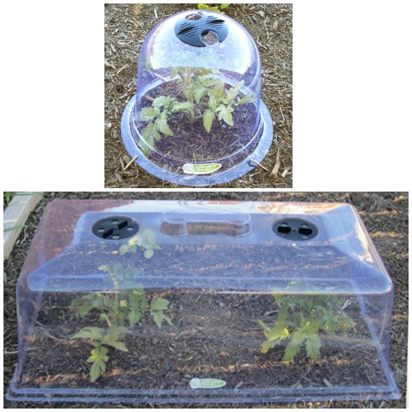 Bell and Rectangle Garden Cloches