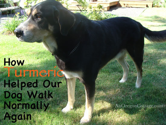 How Turmeric Helped Our Dog Walk Normally - An Oregon Cottage