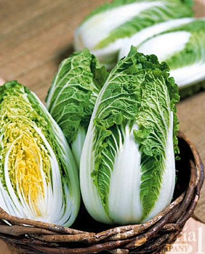 soloist cabbage