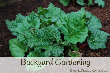 Backyard-Gardening